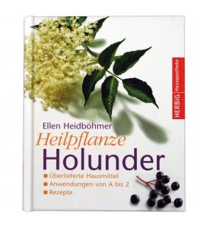 Heilpflanze Holunder