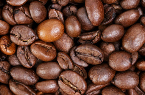 Urwald Kaffee