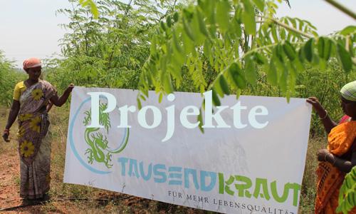Projekte der Tausendkraut GmbH