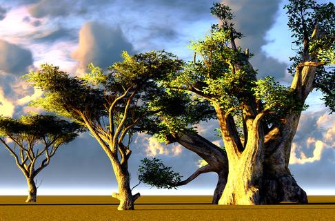 Bio Baobab Pulver kaufen