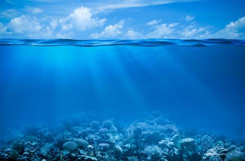 Sango Koralle PLUS Kapseln kaufen